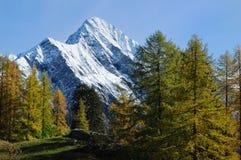 mount sceniczna jesieni Obraz Stock