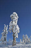 Mount Seymour in winter Royalty Free Stock Image