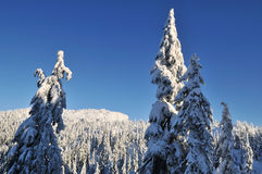 Mount Seymour in winter Royalty Free Stock Photos