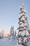 Mount Seymour Winter Morning Stock Images