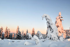 Mount Seymour Winter Morning Stock Photos
