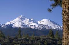 Mt Shasta Ponderosa Pine Cascade Volcano Stock Photos