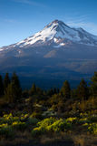 Mt Shasta Vertical Sagebrush Blue Sky Sunrise Royalty Free Stock Image