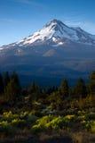 Mt Shasta Vertical Sagebrush Blue Sky Sunrise Royalty Free Stock Image