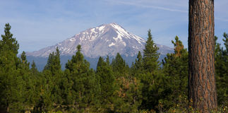 Mount Shasta Viewed From Fire Road California Hill Stock Photos