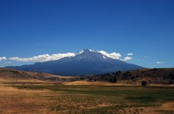 Mount Shasta. In the summer with pasture in foreground Royalty Free Stock Image