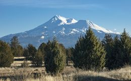Mount Shasta Behind a Juniper Forest in California stock photography
