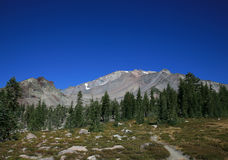 Mount Shasta and Panther Meadow Stock Images