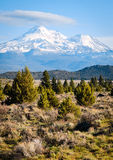 Mount Shasta Royalty Free Stock Photography