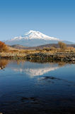 Mount Shasta Reflection Stock Image