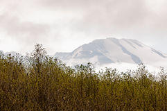 Mount St. Helens Stock Photos