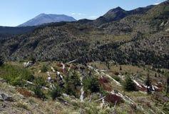 Mount St. Helens Blast Zone Royalty Free Stock Photo