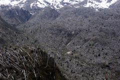 Mount St. Helens blast zone Stock Photos