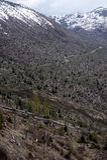 Mount St. Helens blast zone Stock Image