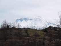 Mount St. Helens through the forest stock photos
