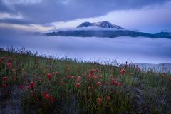 Mount St. Helens in Morning Fog Royalty Free Stock Image