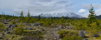 Mount St. Helens. A panoramic view of Mt. St. Helens, the infamous volcano that now lies dormant in a Washington State National Park Royalty Free Stock Photo