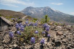 Mount Saint Helens Stock Photography