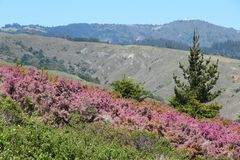 Mount Tamalpais State Park Royalty Free Stock Image