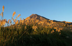 Mount Taranaki Royalty Free Stock Photography