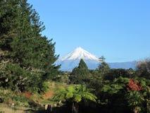 Mount Taranaki, New Zealand. A clear daytime shot, full of detail of Mt. Taranaki in New Plymouth, New Zealand, framed by native trees royalty free stock photography