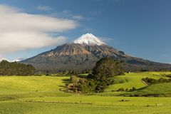 Mount Taranaki under the blue sky with grass field and cows as a foreground in the Egmont National Park. New Zealand. Mount Taranaki under the blue sky with royalty free stock photography