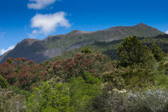 Mount Tarawera, New Zealand Stock Photo