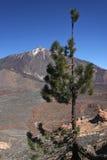 Mount Teide Stock Photo