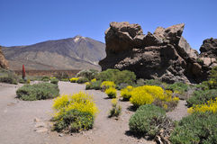 Mount Teide at Canary island Royalty Free Stock Photos