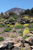 Mount Teide Royalty Free Stock Image