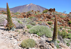 Teide view Stock Images