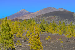 Mount Teide National Park Royalty Free Stock Images