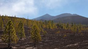 Mount teide stock footage
