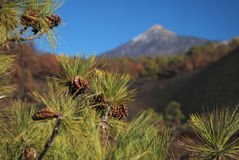 Mount Teide the volcano on Tenerife Royalty Free Stock Photography