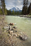 Mount Temple and Bow River. Iconic landmarks of Banff - Mount Temple and the Bow River Stock Image