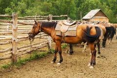 Free Mount Tethered Horses Stock Photo - 10413370