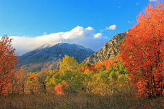 Mount Timpanogos. Royalty Free Stock Image