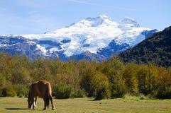 Mount Tronador - Patagonia. Horse near Mount Tronador - Patagonia Stock Photos