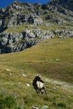 Mount Tymfi Royalty Free Stock Photos