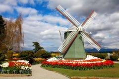 Mount Vernon, WA USA - April 21, 2011: Tulip Farm. Royalty Free Stock Photo