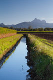Mount Warning and Cane Fields, NSW, Australia. Mount Warning seen from Near Murwillumbah, New South Wales, Australia. Looking along a drainage/irrigation ditch Stock Photo