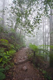 Mount Warning in fog Stock Photos