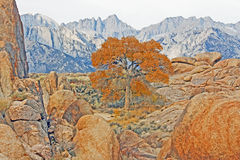 Mount Whitney and the tree Royalty Free Stock Images