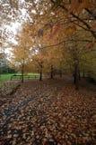 Mount Wilson autumn colours Stock Image