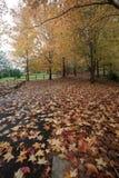 Mount Wilson autumn colours Royalty Free Stock Photography
