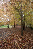 Mount Wilson autumn colours Royalty Free Stock Image