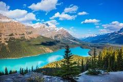 Mountain湖作为狐狸头 库存照片