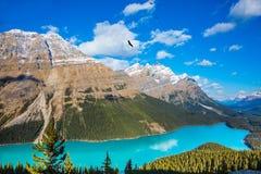 Mountain湖作为`狼头` 库存照片