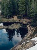 Mountain湖在杉木的云杉的森林里 库存图片