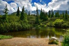 Mountain湖在Tatra山森林里 免版税库存图片